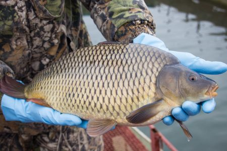 бизнес план рыбоводного хозяйства