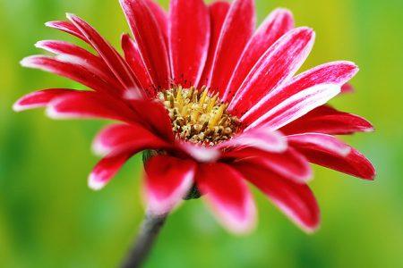 Бизнес план теплицы по выращиванию цветов