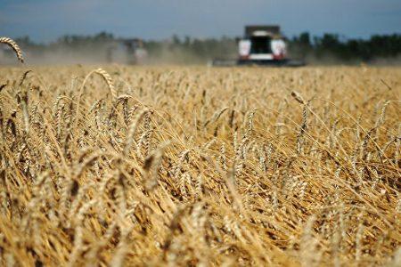 Бизнес план пшеница и картофель