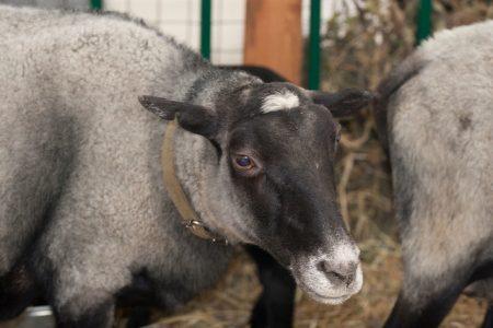 Бизнес план овцеводства